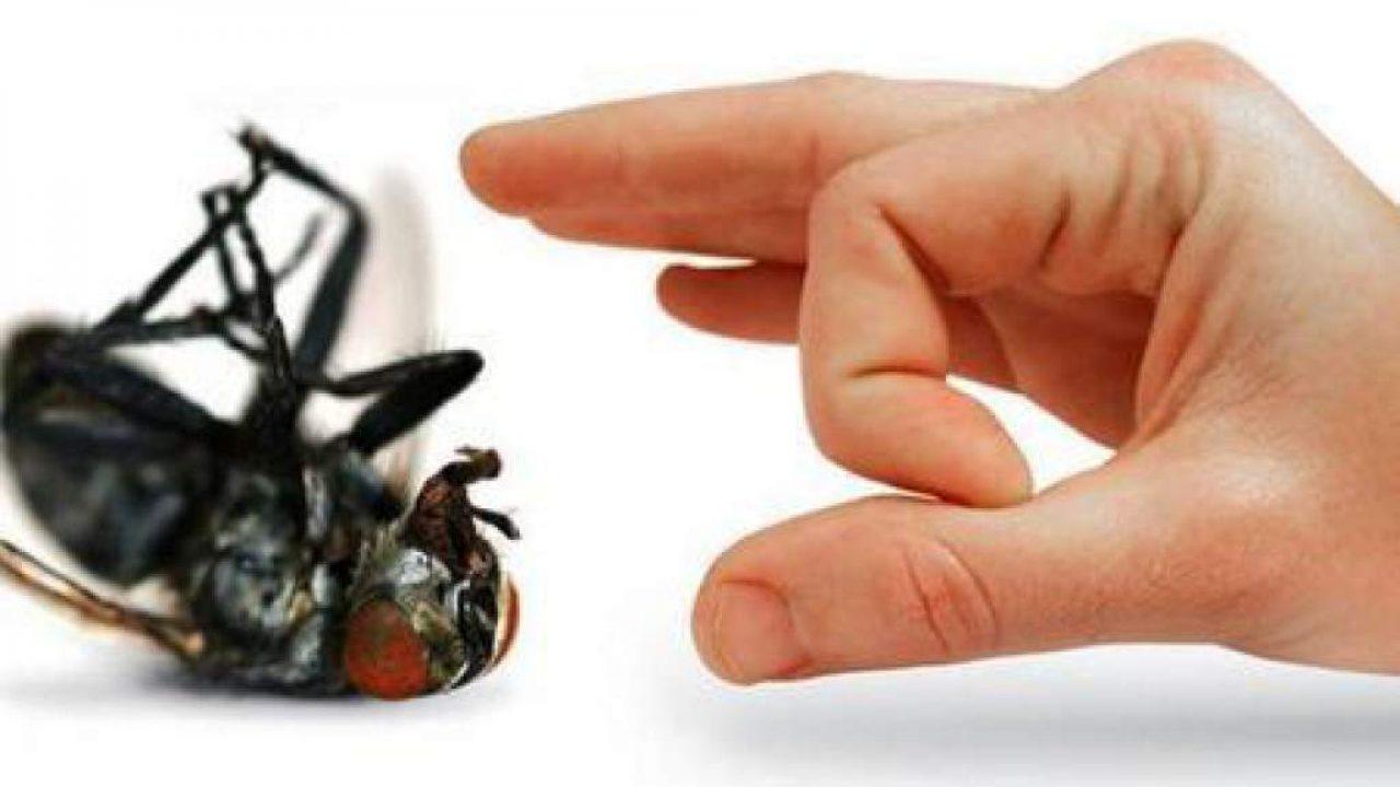 Remedios caseros para las moscas