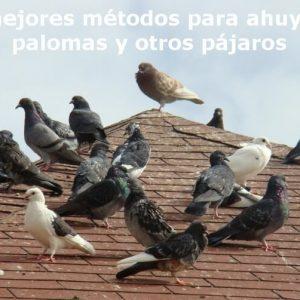 Cómo deshacerse de las Palomas, Consejos para ahuyentarlas