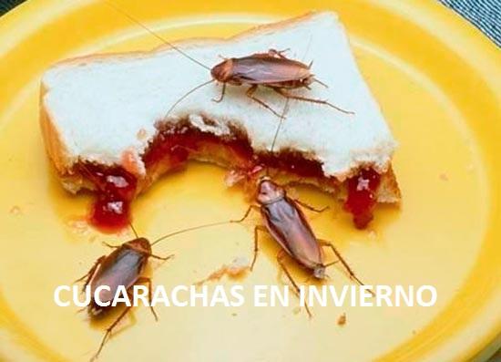 Cucarachas pequeñas en Invierno
