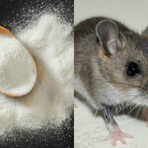 Especias para repeler a las ratas