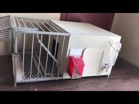 Trampa para palomas casera